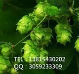 黄腐酚/Xanthohumol/6754-58-1/啤酒花提取物