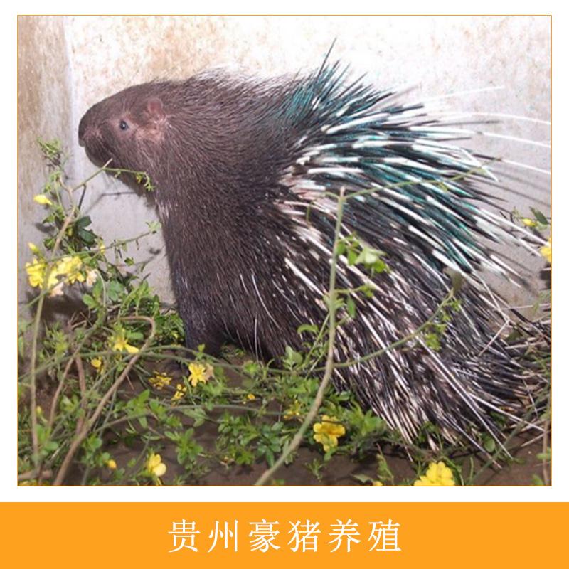 渔貂吃豪猪_豪猪养殖图片/豪猪养殖样板图