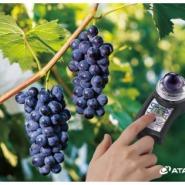 葡萄  非破坏式糖度计图片