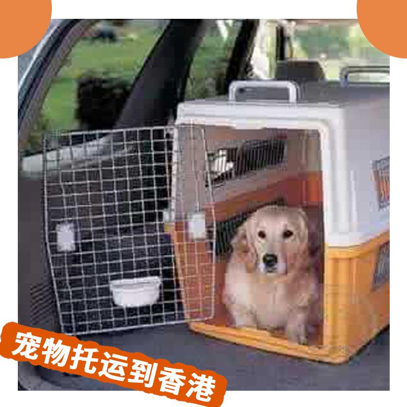 宠物托运到香港 港澳宠物出入境 猫狗等宠物代运托管 高效率安全