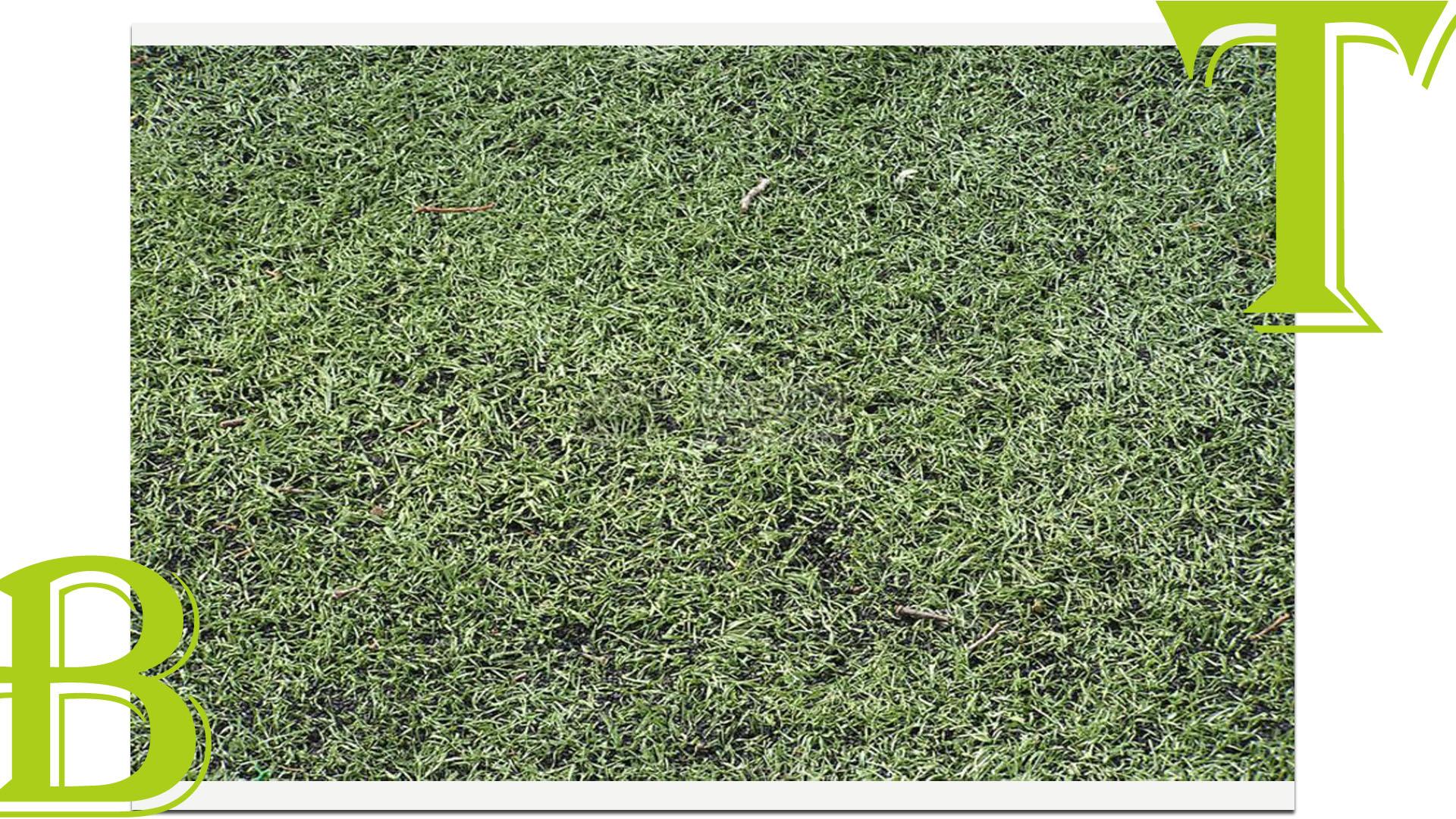 贵州厂家型人造草坪批发供应商销售
