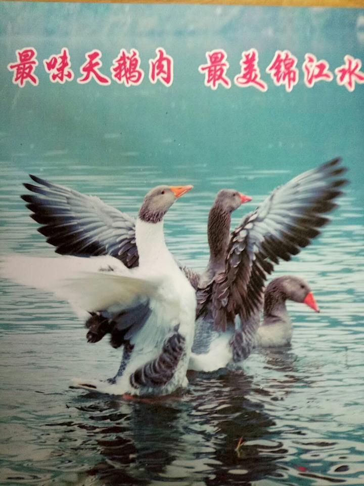 最美锦江水  最味麻阳鹅