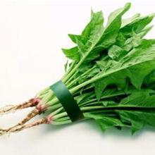 深圳佳惠鲜送菜公司 蔬菜批发配送 新鲜蔬菜