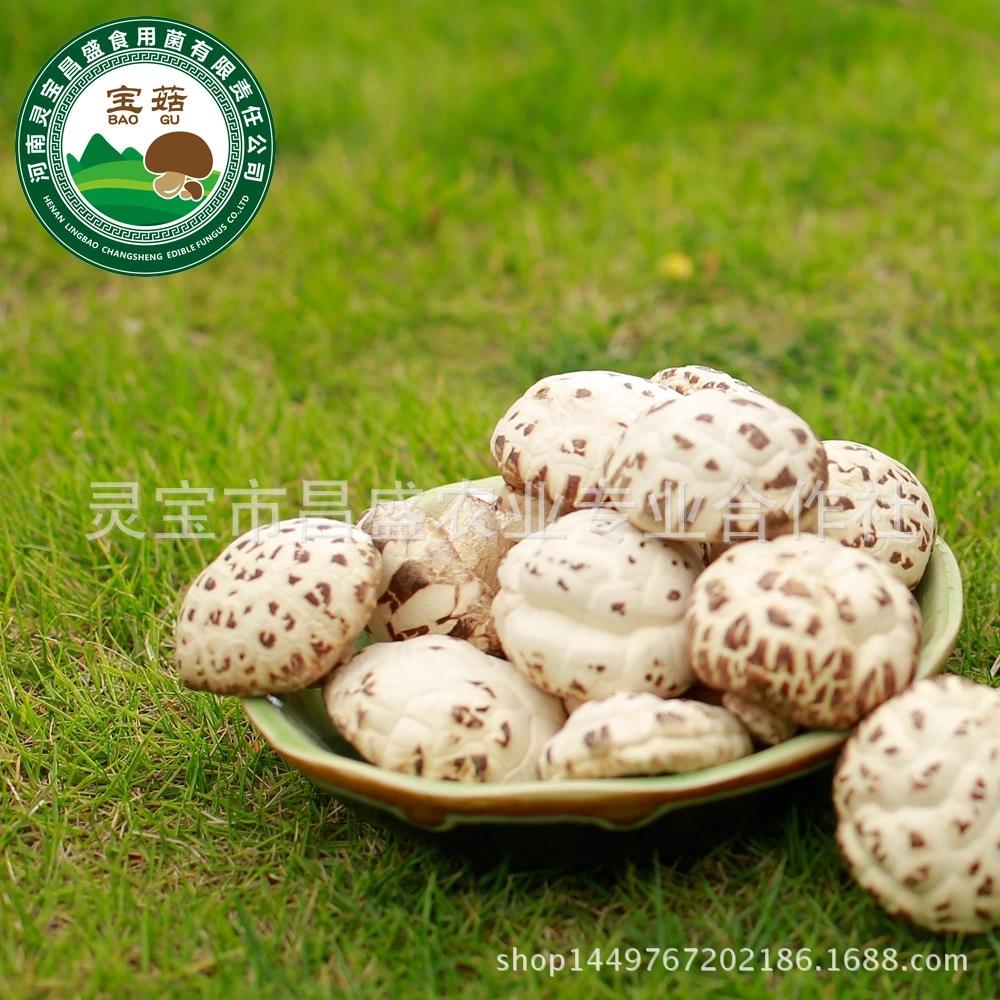 昌盛宝菇 精品厚白干花菇250g 手挑好货精品礼盒装送礼厂家直销