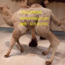 山东骆驼毛绒_骆驼工艺品_骆驼工艺品批发价格_优质骆驼工艺品专业定制