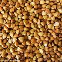 汉江畜禽常年求购荞麦玉米等原料