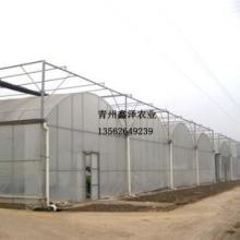 山东供应樱桃薄膜温室大棚观光樱桃花卉阳光板温室薄膜大棚出厂价出售图片