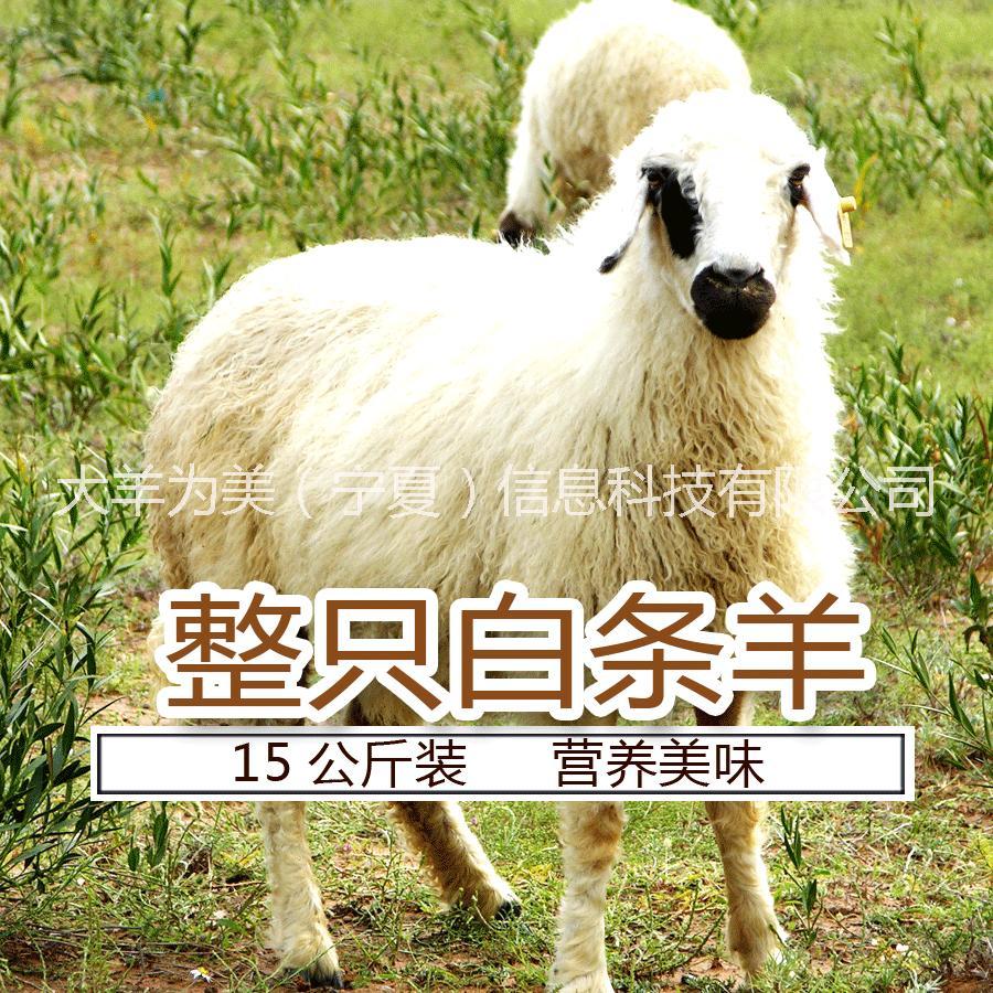 宁夏滩羊肉 宁夏滩羊肉大羊为美白条羊 宁夏滩羊肉价格大羊为美白条羊