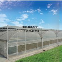 建温室大棚价格是多少 双拱双膜连栋温室  温室大棚哪里质量好 连栋薄膜温室