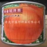 供应黄金冠洋葱种子 进口黄皮洋葱种子 中日照圆葱种子 杂交种 蔬菜种子种苗