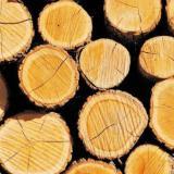 北美铁杉/花旗松原木市场实况专项分析