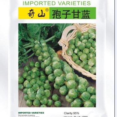 进口孢子甘蓝 孢子甘蓝种子公司销售进口种子价格特色蔬菜种子