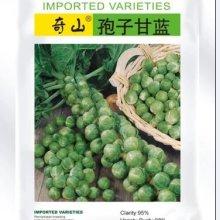 进口孢子甘蓝 孢子甘蓝种子公司销售进口种子价格特色蔬菜种子批发
