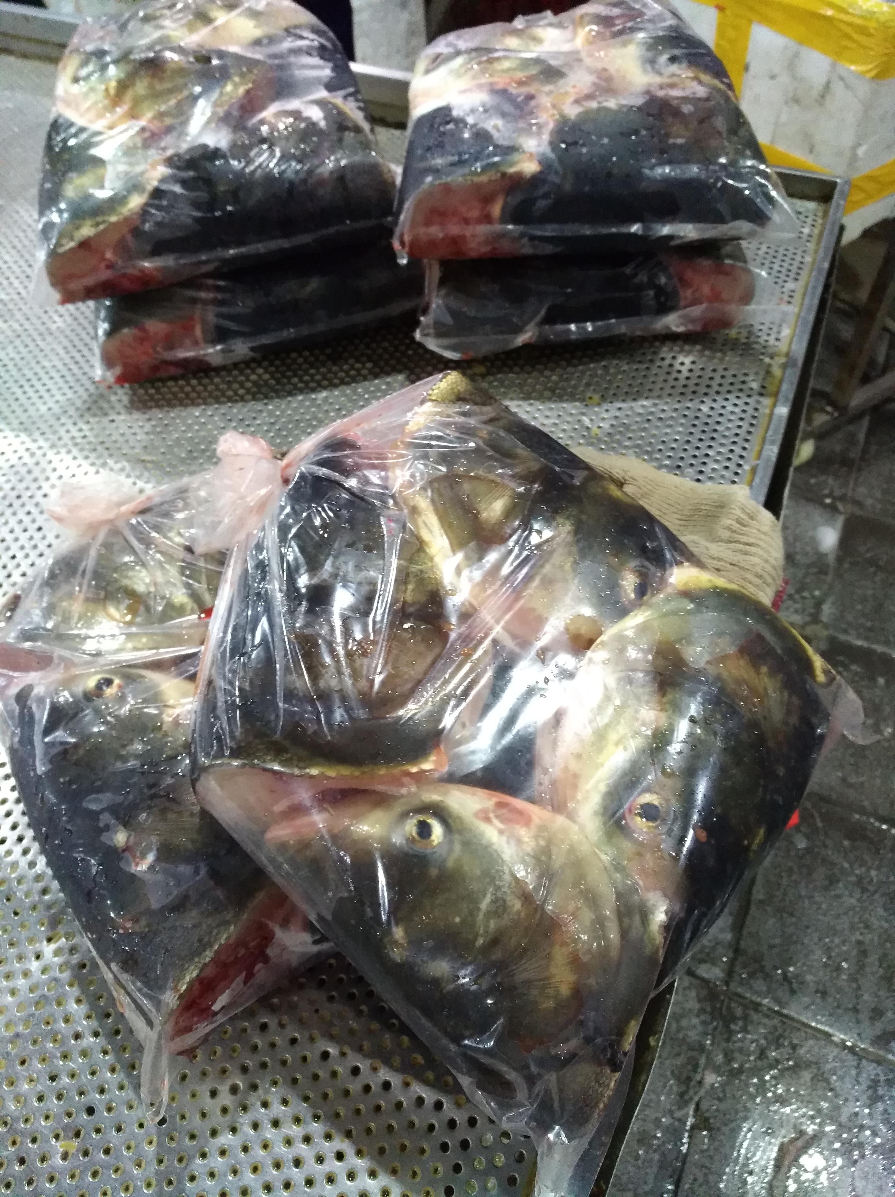 鱼头 鱼头厂家直销 鱼头哪家好 鱼头哪家好 佛山鱼头生产商 鱼头哪家便宜 佛山鱼头出售 佛山鱼头装卖店