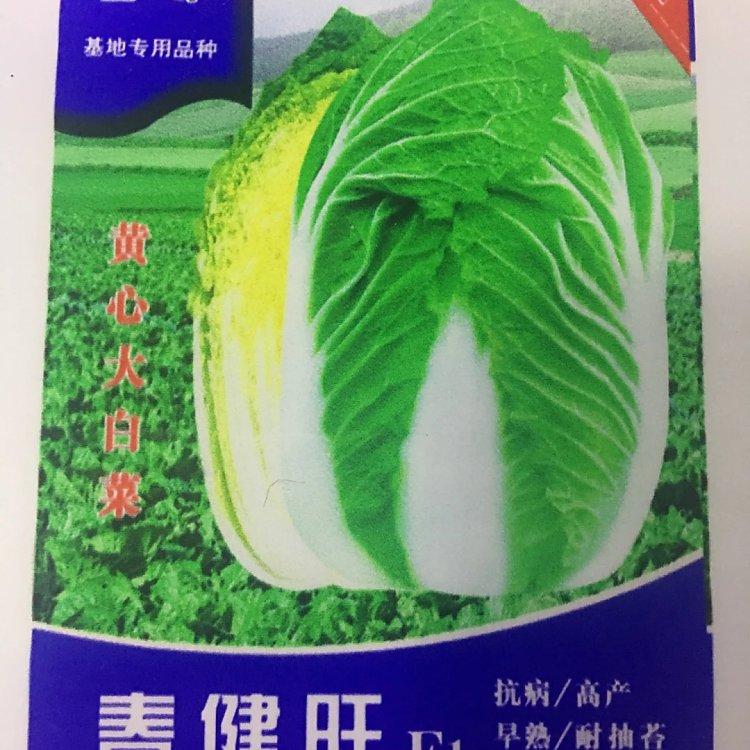 春健旺F1黄芯大白菜种子大白菜种子批发厂家蔬菜基地价格春秋播种白菜种子超适应性大白菜