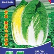 70天秋黄黄芯大白菜种子图片