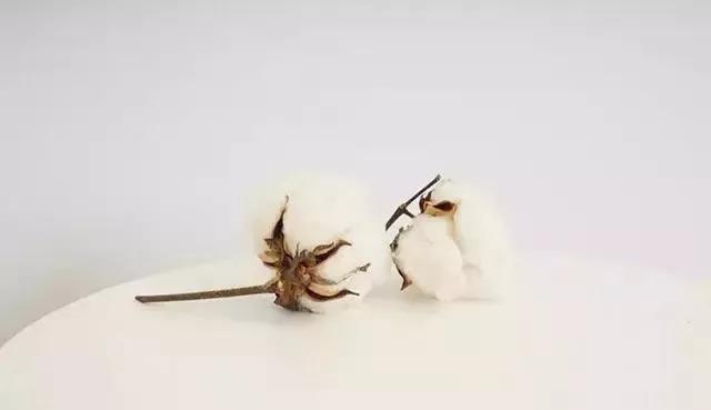 贵州贵阳长绒棉定制生产厂家