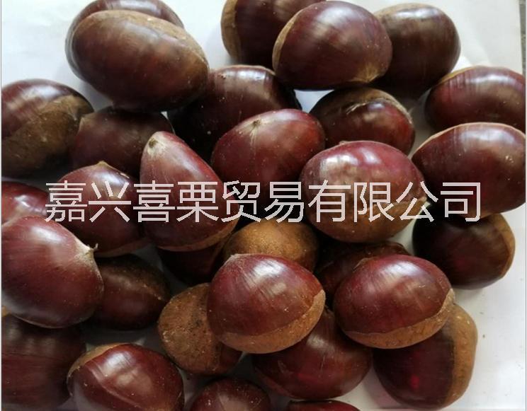 浙江大油栗供货商,新鲜板栗批发,嘉兴喜栗贸易供应优良新鲜生板栗