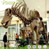 仿真恐龙化石 玻璃钢恐龙化石 仿真恐龙化石骨架 仿真恐龙化石供应厂家 仿真恐龙化石供应商 四川仿真恐龙化石厂家