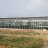 玻璃温室优势介绍 温室大棚用什么玻璃 玻璃连栋温室厂家