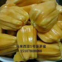 马来西亚1号菠萝蜜 云南红肉菠萝蜜生产基地 供应商经销商报价 红肉菠萝蜜批发价格
