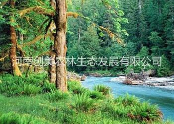 周口创美林征收实用林地可行性报告图片