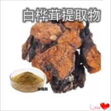 白桦茸提取物 白桦茸浓缩液 口服液  西伯利亚灵芝提取物 桦褐孔菌多糖
