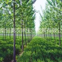 周口林业评估,林业评估服务,林业评估事务所