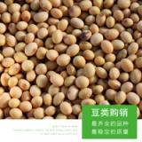 绿豆杂粮 农家小红豆厂家供应 粮食大豆农家自产有机散装豆类五谷杂粮批发