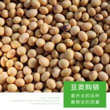 绿豆杂粮 农家小红豆厂家供应 粮食大豆农家自产有机散装豆类五谷杂粮批发批发