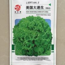 供应蔬菜种子叶菜类种子优质生菜种子粒尔田美国大速生生菜种子 粒尔田大速生菜种子