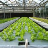 无土栽培蔬菜产量/无土栽培蔬菜比普通蔬菜种植产量高吗/山东潍坊建达温室生产按装