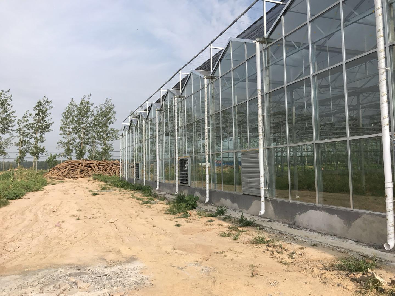 玻璃温室,温室大棚,连栋温室,全国玻璃屋温室