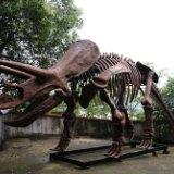 硅胶制作仿真恐龙模型 仿真动物制