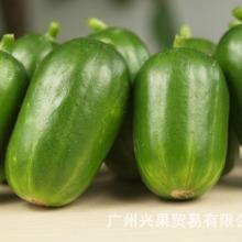 水果黄瓜种子批发水果黄瓜种植技术水果黄瓜产地