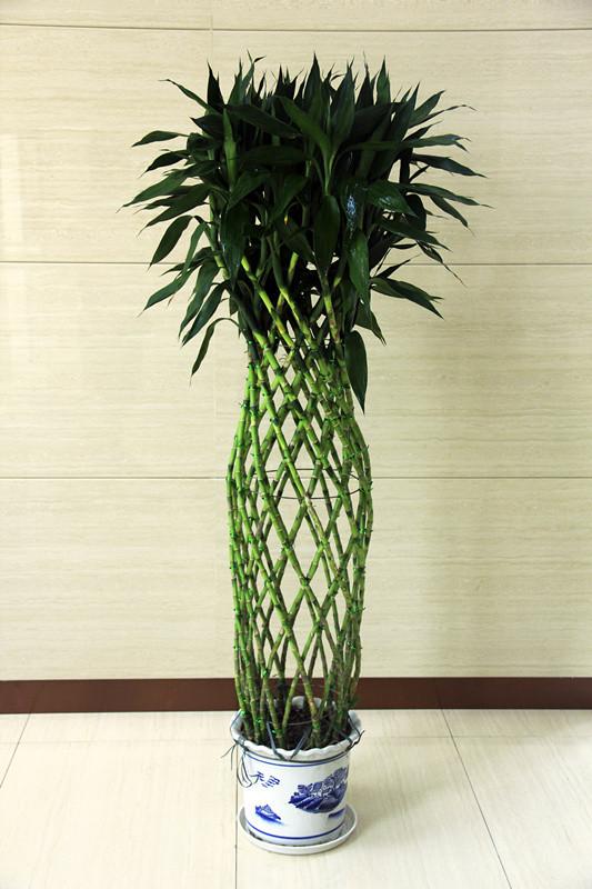 深圳植物租摆价格-供应植物租摆- 植物租摆电话