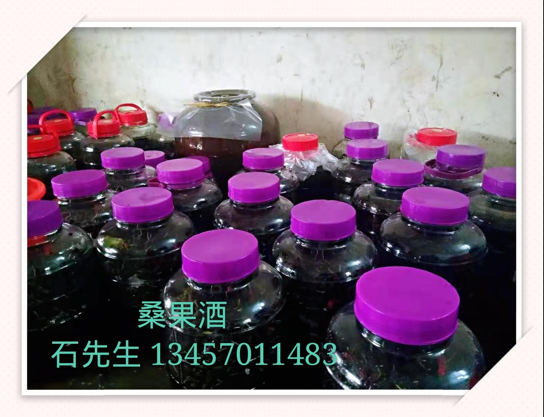 广东桑果酒优质批发商