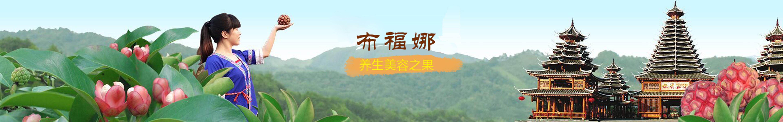 广西杨昌宏布福娜黑老虎杂交苗基地直销批发报价-黑老虎杂交苗种植基地