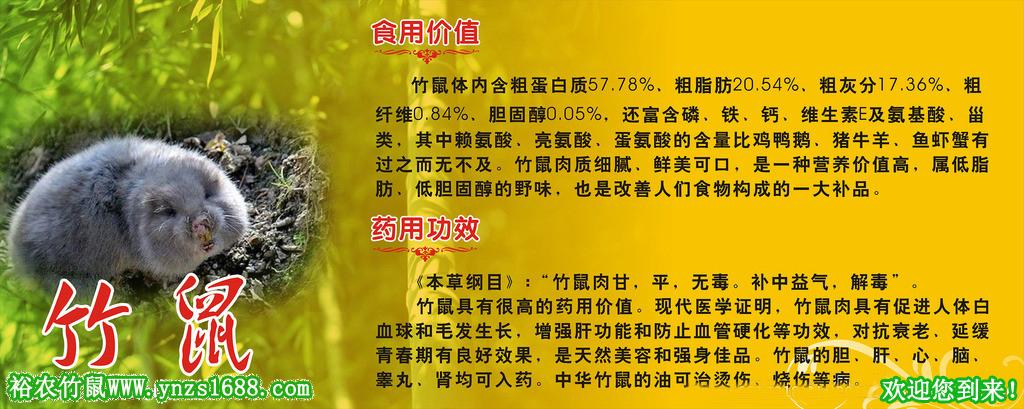 湖南竹鼠基地-【广西桂林资源县特大竹鼠养殖基地批发价格】
