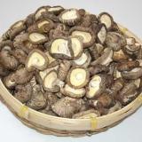 百色市香菇种植基地-长基供应各种果蔬苗-低价订购