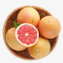 蜜柚-红肉蜜柚苗批发-采购漳州红肉蜜柚--红肉蜜柚种植基地
