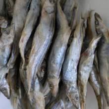 山东冻干带籽多春鱼厂家直销批发零售价格优惠