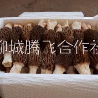 羊肚菌种植技术羊肚菌种植技术羊肚菌菌种欢迎咨询羊肚菌菌种欢迎咨询