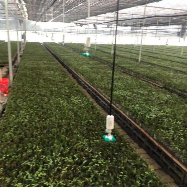 盐城市中山杉容器苗种植-基地-大量批发-出售-价格-报价