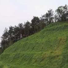 嘉树湘公司承接山地覆绿、土壤修复工程,数十年积淀的实力施工方,不容忽视。图片