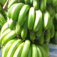 【云南威尼斯香蕉】新鲜水果现摘非红美人红皮香蕉天宝香蕉苹果蕉