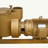 泳池过滤按摩水泵-比美铜泵厂家-厂家批发零售-铸铁泵系列直销